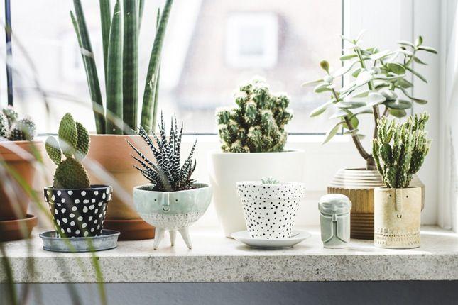 Idée déco #01 : La botanique